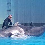 Тренер на спине дельфина