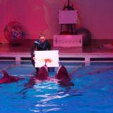 Дельфины-художники